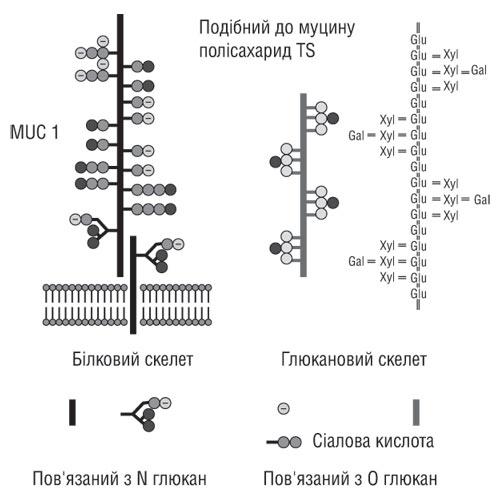 TS-полісахарид (TSP)